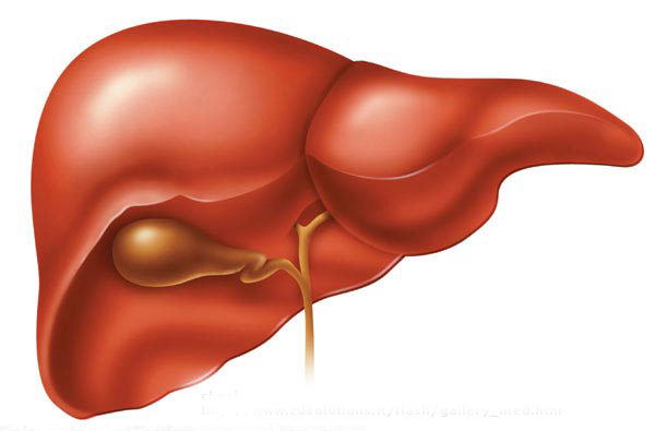 Protect Your Liver With Coffee