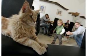 AUSTRIA-ANIMALS-FEATURE-CAFE-NEKO